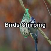 Birds Chirping von Yogamaster