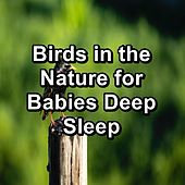 Birds in the Nature for Babies Deep Sleep by Spa Relax Music