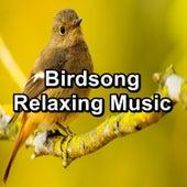 Birdsong Relaxing Music von Meditation Spa