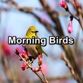 Morning Birds von Yoga