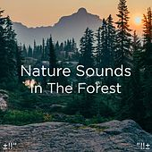 Nature Sounds In The Forest by Asian Traditional Music
