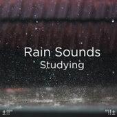 Rain Sounds Studying by Rain Sounds