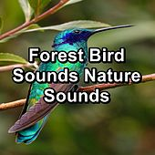 Forest Bird Sounds Nature Sounds by Spa Music (1)