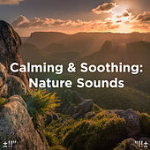 Calming & Soothing: Nature Sounds by Asian Traditional Music