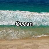 Ocean by S.P.A