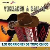 Véngase A Bailar de Los Gorriones Del Topo Chico