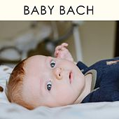 Baby Bach by Walther Cuttini
