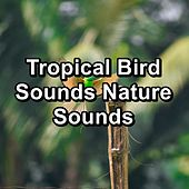 Tropical Bird Sounds Nature Sounds by Spa Relax Music