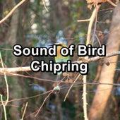 Sound of Bird Chipring von Yoga Shala