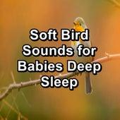 Soft Bird Sounds for Babies Deep Sleep von Yoga Music