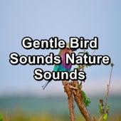 Gentle Bird Sounds Nature Sounds von Yoga