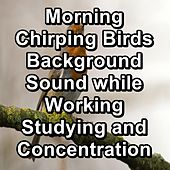 Morning Chirping Birds Background Sound while Working Studying and Concentration von Yoga