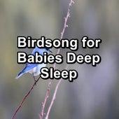 Birdsong for Babies Deep Sleep von Yoga