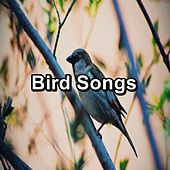 Bird Songs by S.P.A