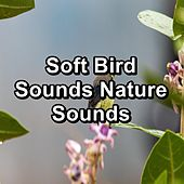 Soft Bird Sounds Nature Sounds von Yoga Music