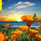 California Poppy 2 de Rexx Life Raj