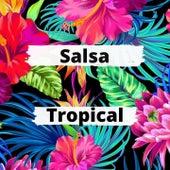 Salsa Tropical de Grupo Niche, Orquesta Canela, Pedro Conga, Robero Roena