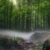 Fine Forest Sounds by Nature Soundscape