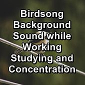 Relaxing Bird Sounds by S.P.A