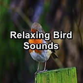 Relaxing Bird Sounds by Spa Relax Music