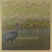 Caminando by Various Artists
