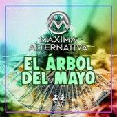 El Árbol del Mayo by Maxima Alternativa