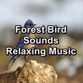 Forest Bird Sounds Relaxing Music von Yoga