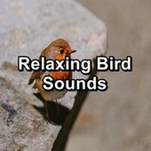 Relaxing Bird Sounds by Spa Music (1)