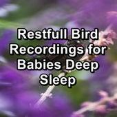 Restfull Bird Recordings for Babies Deep Sleep von Yoga