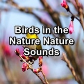 Birds in the Nature Nature Sounds by S.P.A