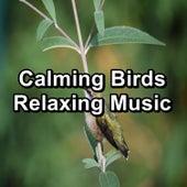 Calming Birds Relaxing Music von Yoga Flow