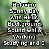 Relaxing Sunny Day with Birds Background Sound while Working Studying and Concentration by S.P.A