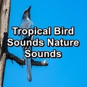 Tropical Bird Sounds Nature Sounds de Thunderstorm Sleep