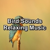 Bird Sounds Relaxing Music von Yogamaster