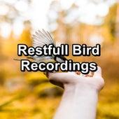 Restfull Bird Recordings von Yogamaster