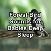 Forest Bird Sounds for Babies Deep Sleep by Spa Relax Music