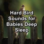 Hard Bird Sounds for Babies Deep Sleep von Yoga