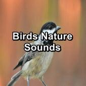 Birds Nature Sounds von Yoga Flow
