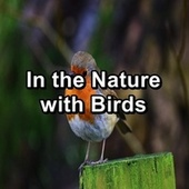 In the Nature with Birds von Yoga Music