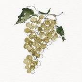 Chardonnay von Phlocalyst