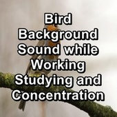 Bird Background Sound while Working Studying and Concentration de Yoga