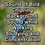 Sound of Bird Chipring Background Sound while Working Studying and Concentration von Yogamaster