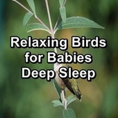 Relaxing Birds for Babies Deep Sleep de Thunderstorm Sleep