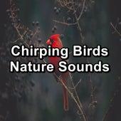 Chirping Birds Nature Sounds von Yoga Flow