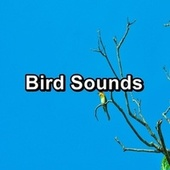 Bird Sounds by S.P.A