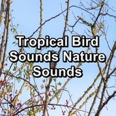 Tropical Bird Sounds Nature Sounds von Yogamaster