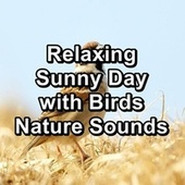 Relaxing Sunny Day with Birds Nature Sounds von Yoga Tribe
