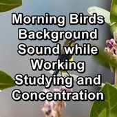Morning Birds Background Sound while Working Studying and Concentration von Yoga