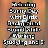 Relaxing Sunny Day with Birds Background Sound while Working Studying and Concentration by Spa Music (1)