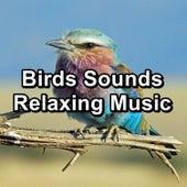 Birds Sounds Relaxing Music von Yoga Music